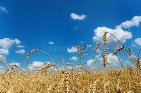 """10月19日:""""农产品批发价格200指数""""比上周五下降0.42个点"""