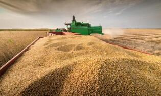 巴西大豆播种进度创10年新低