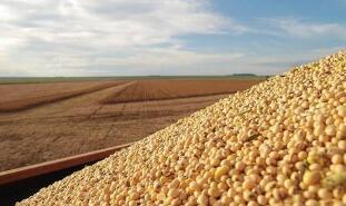 巴西临时取消玉米和大豆进口关税