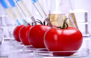 """""""基因编辑食品""""将在日本首获上市批准"""