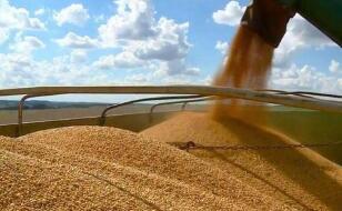芝加哥期货交易所玉米、小麦和大豆期价13日涨跌不一