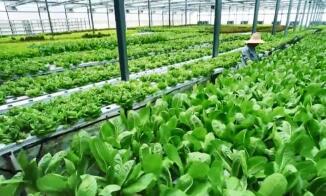 2020年中国农产品质量安全例行监测合格率达97.8%
