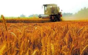 芝加哥期货交易所玉米、小麦和大豆期价20日继续调整下跌