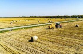 芝加哥期货交易所玉米、小麦和大豆期价27日收盘涨跌不一