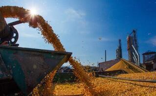 芝加哥期货交易所玉米、小麦和大豆期价4日涨跌不一