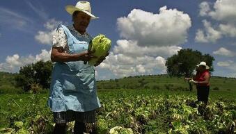 2020年墨西哥农产品出口再创新高