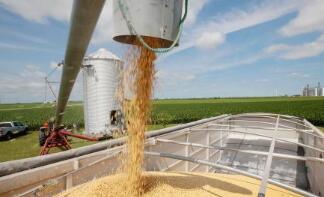 芝加哥期货交易所玉米、小麦和大豆期价8日全线上涨