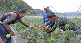 韩国面向境内外国人限时放开季节工市场