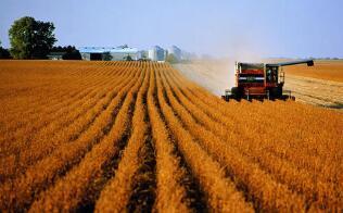 芝加哥期货交易所玉米、小麦和大豆期价17日涨跌不一