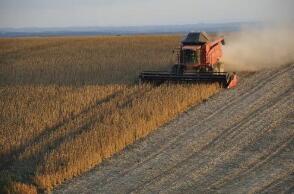 芝加哥期货交易所玉米、小麦和大豆期价15日全线上涨