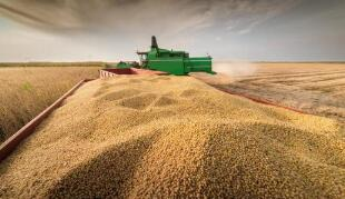 全球食品价格上涨,国际高粱价格大涨超八成