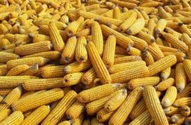 大商所关于新增玉米等15个品种基差交易上线有关事项的通知 大商所发〔2021〕142号