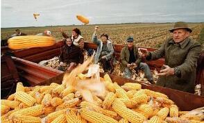 芝加哥期货交易所玉米、小麦和大豆期价30日全线下跌