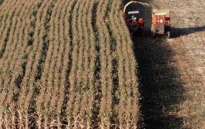 芝加哥期货交易所玉米、小麦和大豆期价31日上涨