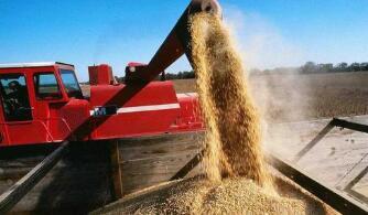 美国农业部报告显示全球小麦库存下降