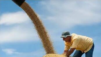 美国玉米期货创近八年新高,因美国农业部(USDA)下调国内库存预期值
