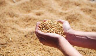 CBOT大豆下跌,因USDA上调巴西大豆产量预期