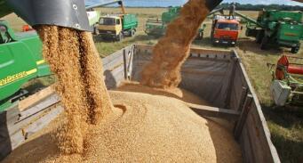 2021年南非主要食品价格开始回落