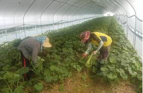 韩外国劳工滞留期限今日起自动延长一年