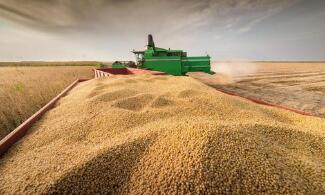 CONAB:CBOT大豆价格预计保持坚挺