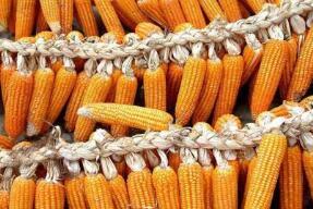 上周食用农产品价格小幅回落 生产资料价格有所回升