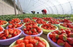 """4月27日:中国""""农产品批发价格200指数""""比昨天下降0.03个点"""