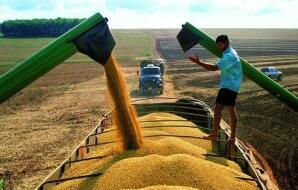全球粮价涨至8年最高位
