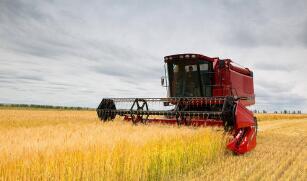 芝加哥期货交易所玉米、小麦和大豆期价13日全线下跌