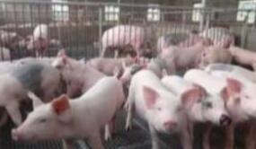最严格监管 保肉食品安全
