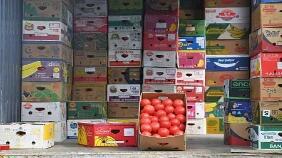 上周食用农产品价格小幅回落 生产资料价格略有上涨