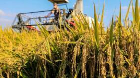 联合国秘书长呼吁通过改变行为促进粮食安全