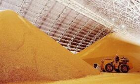芝加哥期货交易所玉米、小麦和大豆期价20日全线上涨